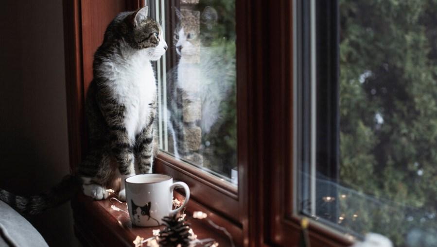 Kucing duduk di ambang jendela melihat ke luar jendela