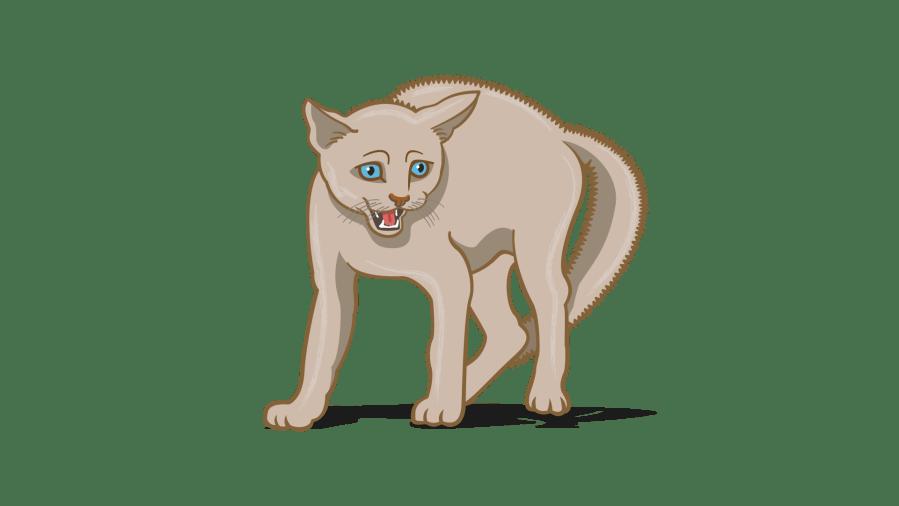bahasa tubuh kucing yang menakutkan
