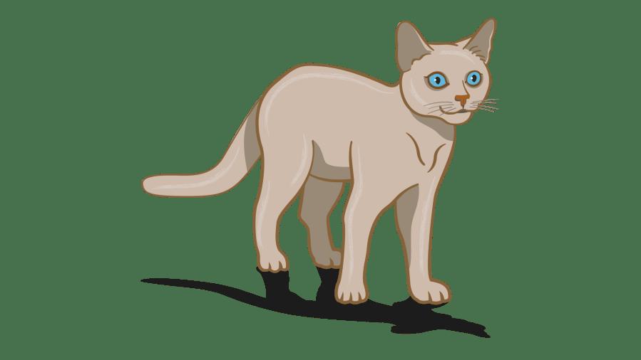 bahasa tubuh kucing yang terfokus