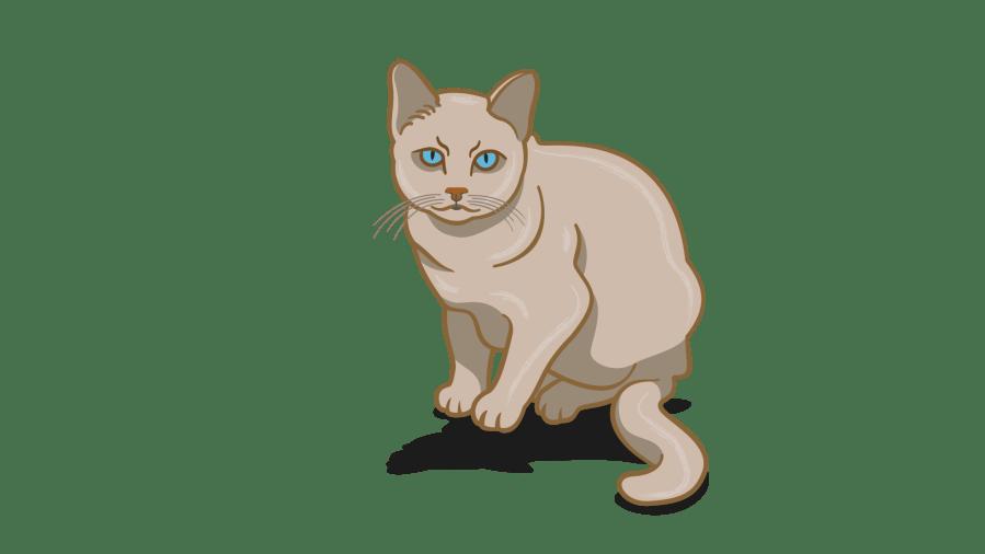 bahasa tubuh kucing frustrasi