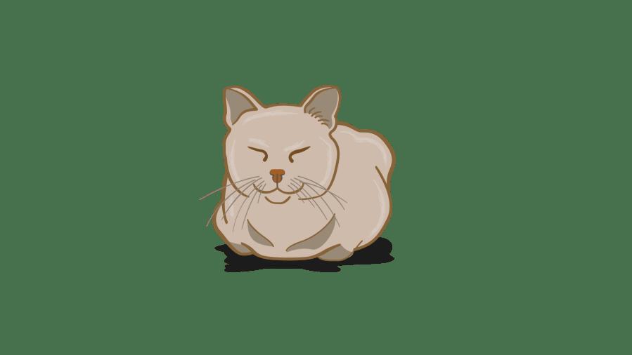 bahasa tubuh kucing bahagia