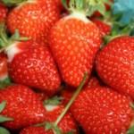 Smoothie | Joy Bauers 5 Calorie | Purity Natural