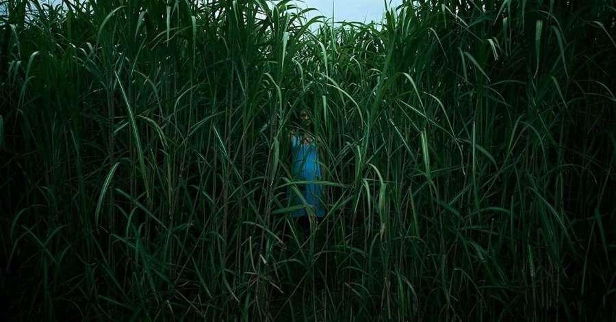 Reseña de la pelicula «En la hierba alta» – Netflix – Stephen King