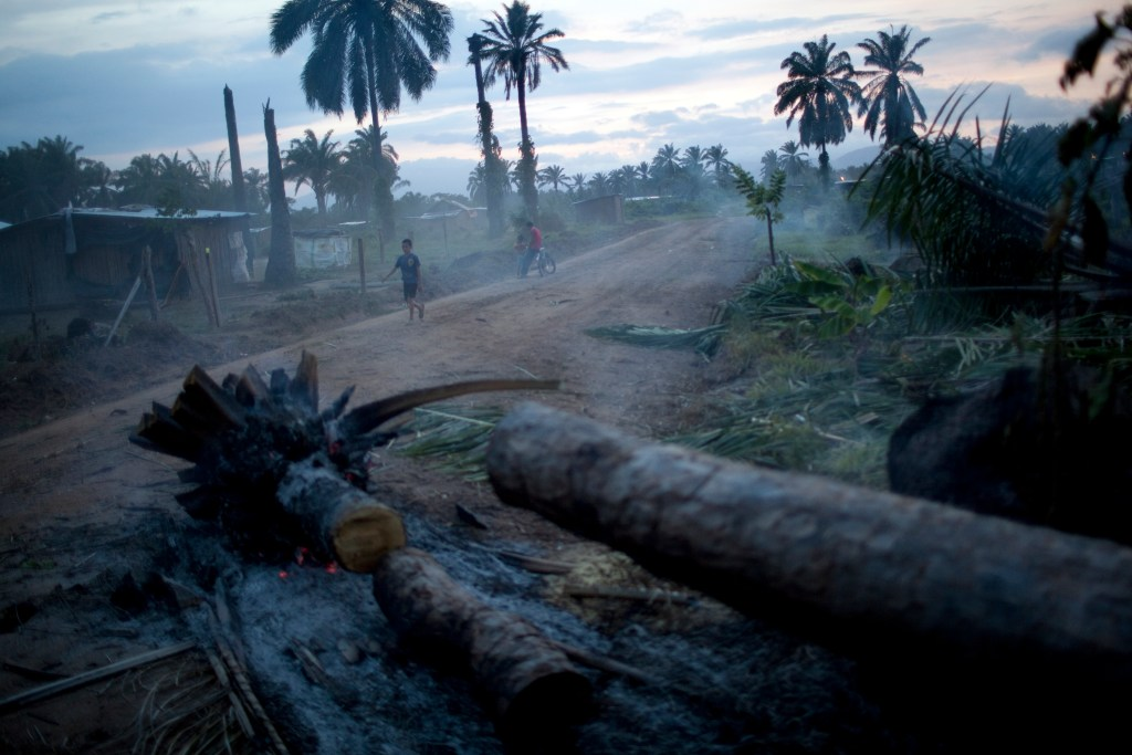 "In this May 5, 2012 photo, a boy walks next to palm trees cut by villagers to built new homes in those areas in ""La Confianza"" peasant model city, Bajo Aguan, Honduras. Peasants from MUCA (Movimiento Unificado Campesino del Bajo Aguan) occupied around 7000 sq meters of productive land close to the city of Tocoa in the Valley of Bajo Aguan, eastern coast of Honduras in December, 2009. They operate a comercial production of african palm and they also stablished what they call a ""peasant model city"" called ""La Confianza"" where more than 300 hundred families live. Since then an open conflict between them and the alleged owner of the land, Miguel Facussé, one of the most powerful businessmen in Honduras has left more than 60 people dead including peasants, security guards, a journalist and members of the Honduran national police. (AP Photo/Rodrigo Abd)"