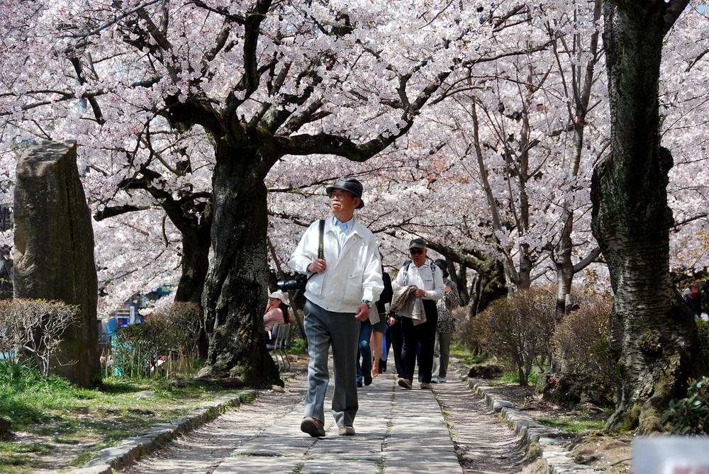 kyoto-philosophers-walk-663d813d-8f04-411f-aaff-4f86dbe536ca
