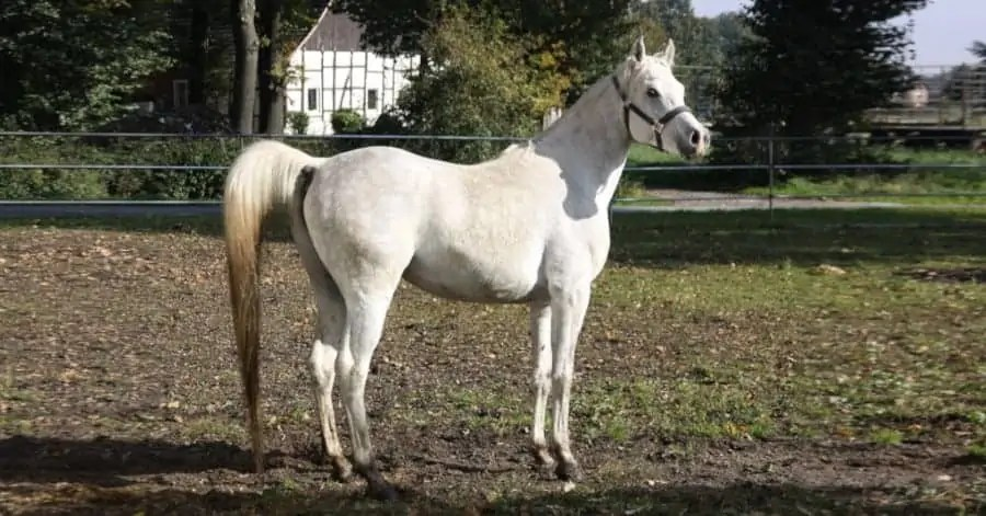 Tenere un cavallo a casa