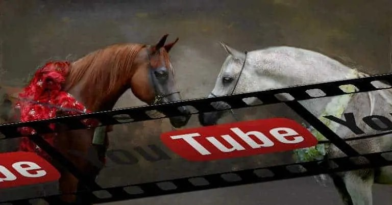 Video cavalli arabi