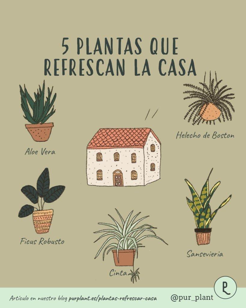 plantas-que-refrescan-la-casa