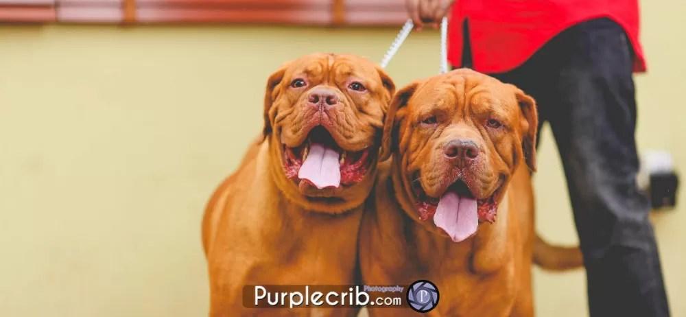 purple crib studios nigeria weddingswww purplecrib com purplecrib kaykluba kayodeajayi kayklubaphotoslagosnigeria 95 500x231@2x - Man's Best Friend