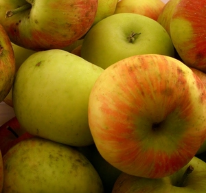 Apples, Honeycrisp #2,...