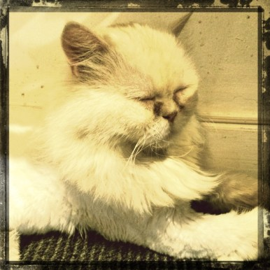 Miao Cat Cafe Cotton