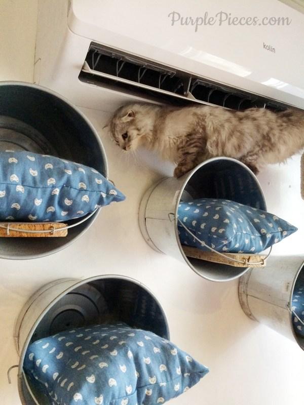 Miao Cat Cafe Elf Elfiya Scottish Fold