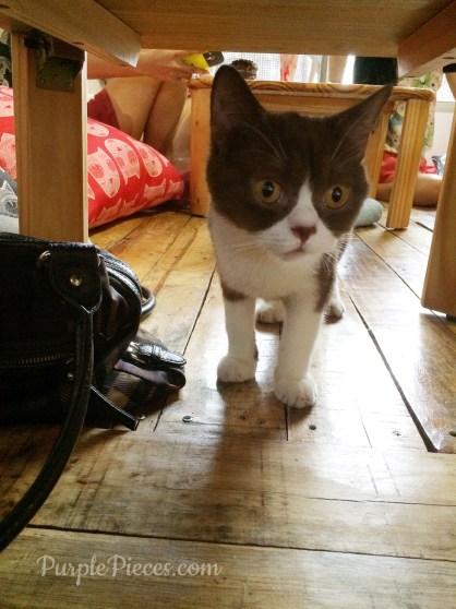 Miao Cat Cafe - Felix
