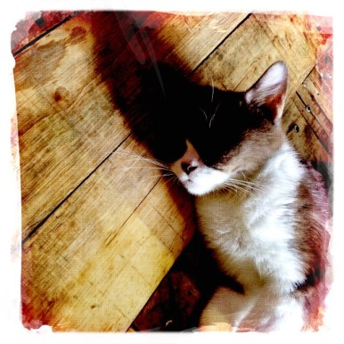 Miao Cat Cafe Hipstamatic