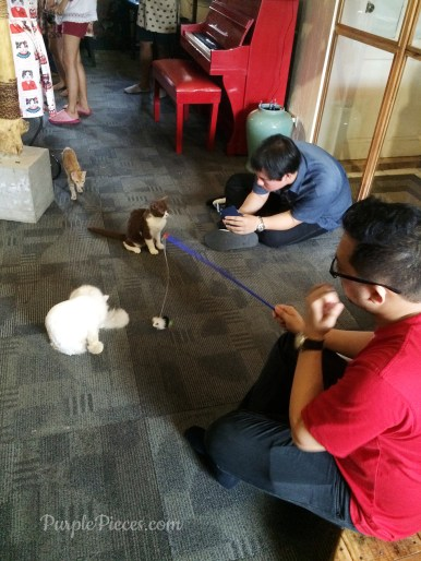Miao Cat Cafe Themed Cafe