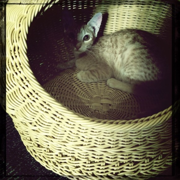 Miao Cat Cafe in Quezon City PH