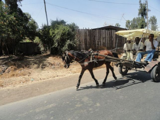 Horse Pulled Taxi Addis Ababa Culture Shock Abbl