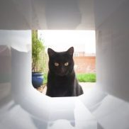 SureFlap Microchip Cat Flap Tunnel Extension