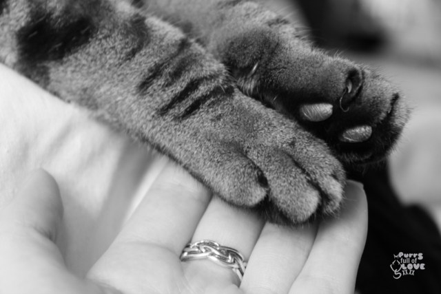 Paws of love