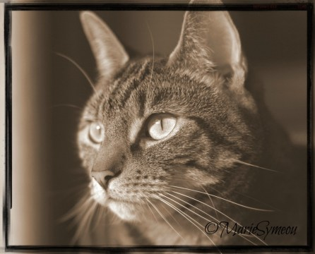 Sepia Saturday Caturday Art