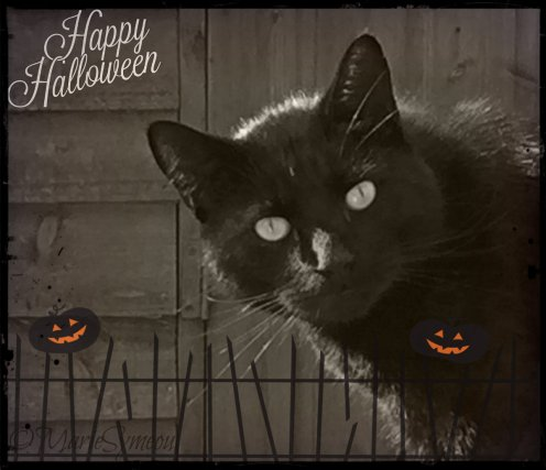 Happy Halloween Caturday
