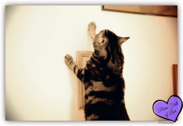 Caturday Art: Climbing the walls vintage style