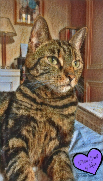 Caturday Art Prisma