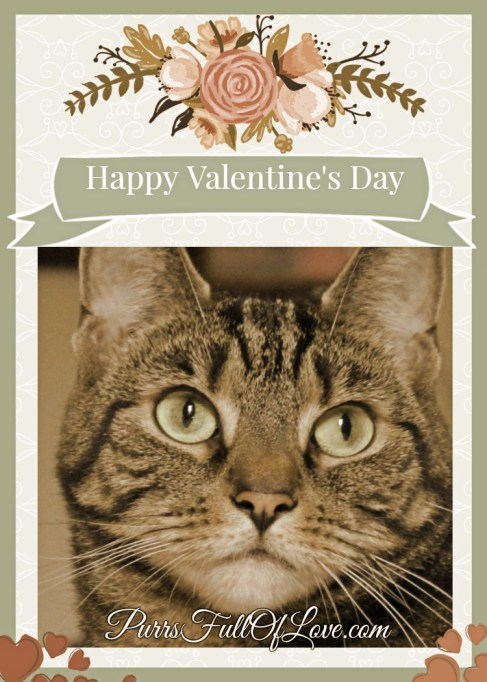 Caturday Art Valentine's Day