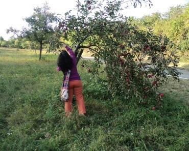 Silakan diambil apel sepuasnya