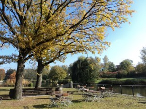 Beginilah Penampilan Pohon-pohon di Musim gugur. Kurpark, Bad Rappenau, Jerman. Culture Shock di Jerman
