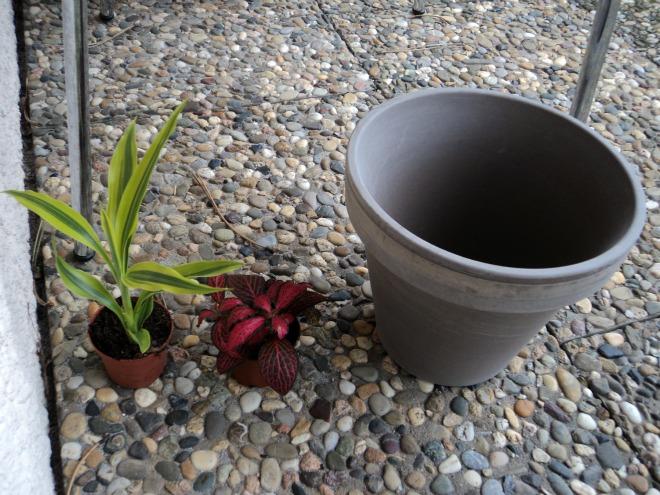 Baru Beli Dua tanaman dan Satu pot Batu