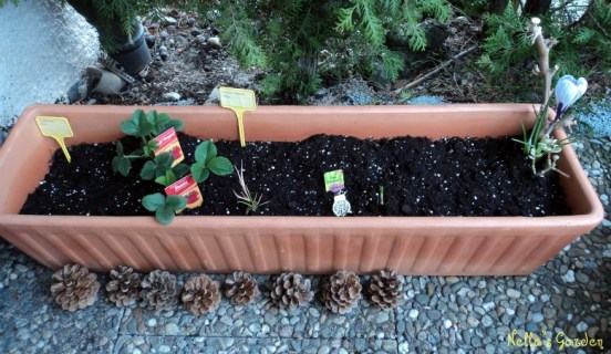 Disatu pot isinya campur sari yakni Kiri Jagung Manis, 2 macam Strawberry, Bunga Dahlia, Tulip, Krokuss