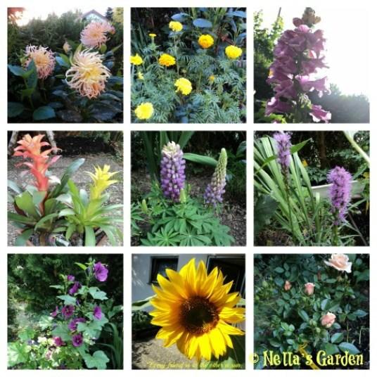 My lovely Flowers. Pupuk dan Nutrisi untuk Tanaman