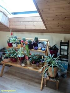Rak Bungaku dihiasi Aneka Tanaman. Tanaman-tanaman Tersebut adalah Tanaman yang Khusus Harus di Taruh Dalam Rumah. Bahasa Kerennya House Plant