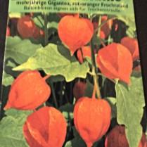 Benih Bunga Lampion (Physalis Alkekengi)