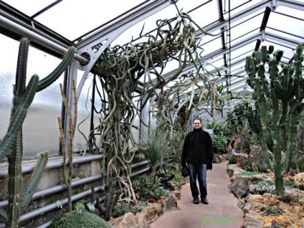 Lihat Kaktus yang Menjalar itu cantik atau seram ya hehe