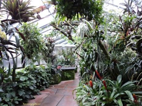 Ruang Tanaman Tropis Wilhelma Stuttgart