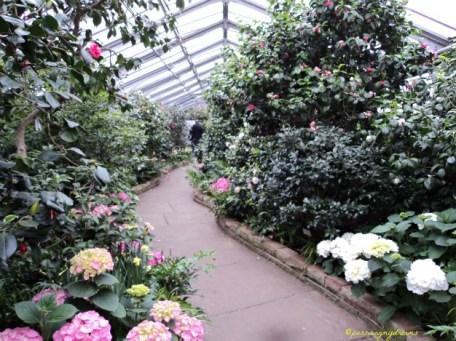 Masih Warna Warni bunga Hydragea. Wilhelma Stuttgart