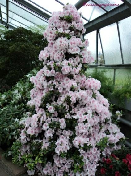 Bunga Azalea dibuat Menjulang seperti menara
