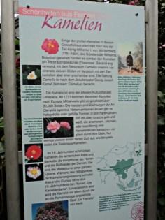 Papan Informasi Bunga Kamelia