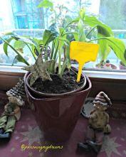 Jangan biarkan tanaman hias berdebu