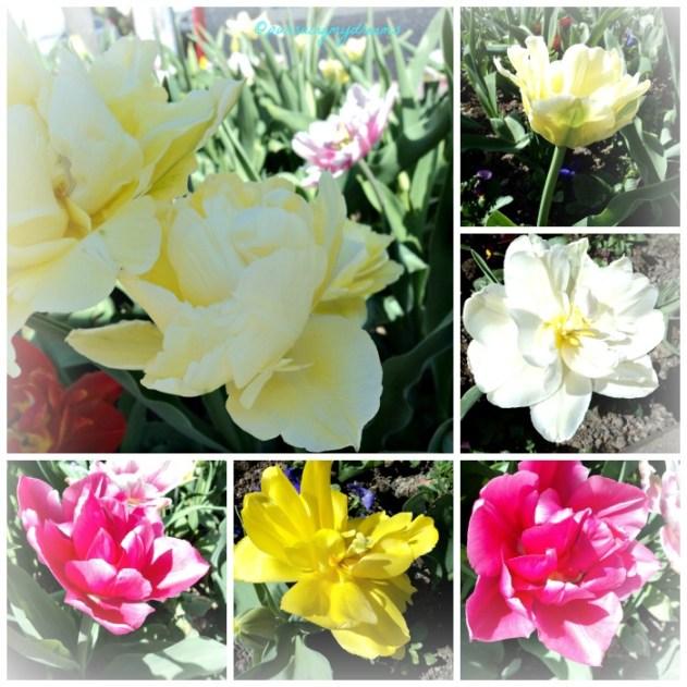 Iseng Foto Tulipnya dikasih efek putih salju