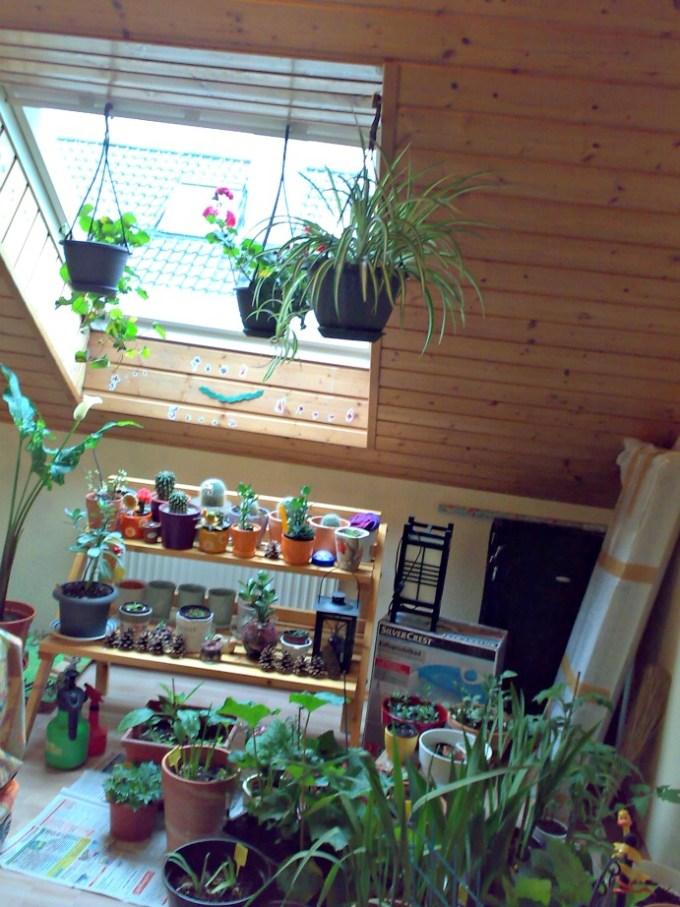 Koleksi Tanaman Diungsikan dulu ke dalam Rumah. Ruangan Tanamanku. Foto dengan hp lama. Curcol Cuaca dan Gadget