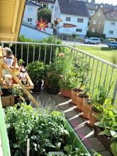 Indahnya Tamanku di Balkon Belakang
