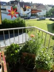 Bunga-bungaku di Pojokan balkon belakang