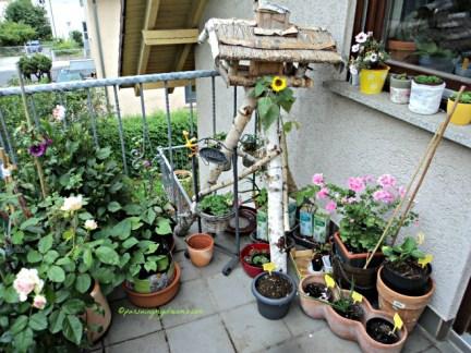 Bunga-bunga di Balkon Belakang