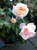 Warna Mawarnya Cantik yaa lembutt