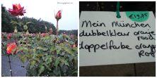 Mein Munchen Rose