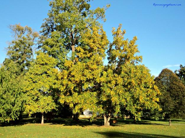 Indahnya warna musim gugur. Salah satu taman di Bad Rappenau, Jerman. Foto minggu terakhir Oktober 2013