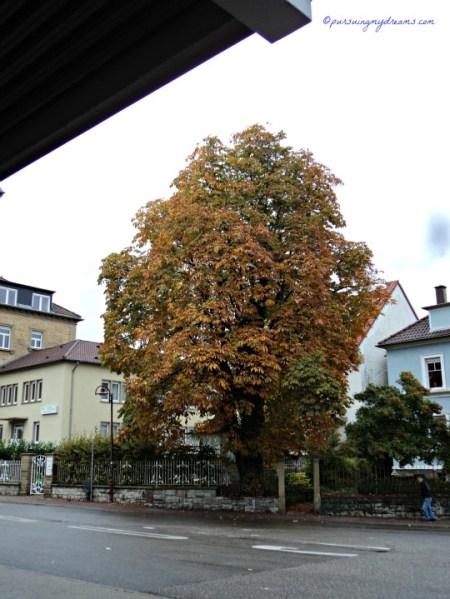 Pohon Besar di stasiun Kereta